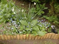 Seasonal - Spring - Garden Flowers - Narcissus, Forget-me-Nots, & Pulmonaria (Can You Spot the Friendly Face?!)