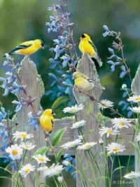 Goldfinch Quartet