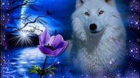 Night of the White Wolf