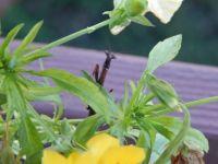 Preying Mantis peek-a-boo!