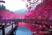 Awesome Lighted Cherry Blossom Lake
