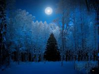 Moonlit Snowy Forest