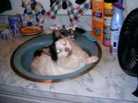 Baby Doll taking a bath in the sink