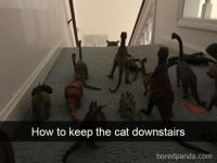 How to keep the cat ....