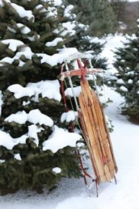 Winter Fun*Your Flyer Sled Awaits