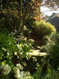 Early morning sunlight in the garden