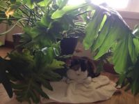 Tabitha In the Jungle