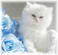 blue, white and cute