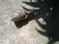 Nature - Garden - Animals - Snail