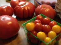 Tomatoes for market