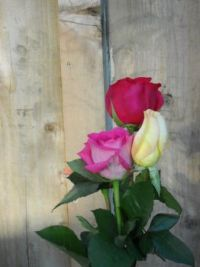 Roses for Mother