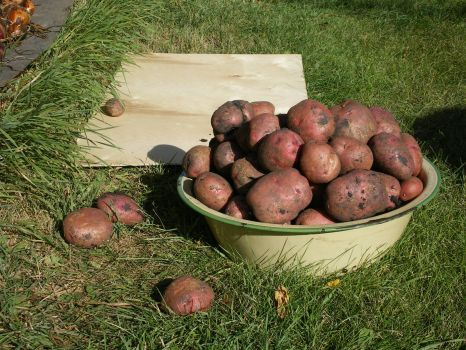 Spuds! Smaller puzzle