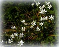STAR OF BETHLEHEM