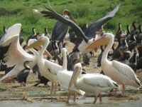 Kazinga Channel birds