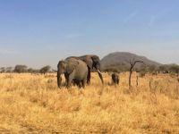 elephants - 3