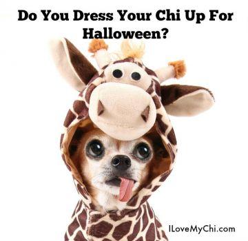 Chihuahua Giraffe!