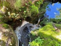 A small forest stream
