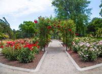 Victoria Rose Garden