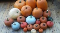Jessica's pumpkins smaller