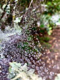 """Spider web in California"""