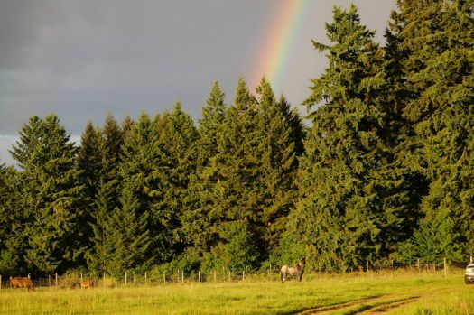 Maestro, a once wild mustang herd in Oregon, enjoying the rainbow. 2015