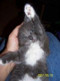 stretch (little Chloe)