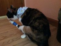 Tabitha_Tending Her Wound