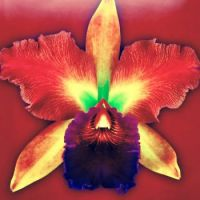 Exotic Orchid - 2