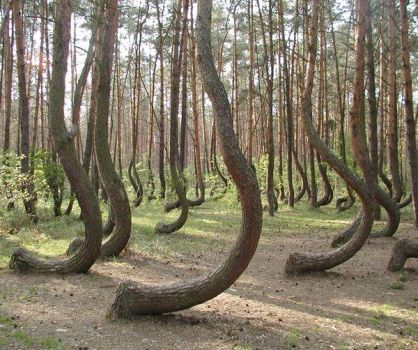 The Crooked Forest, Poland..