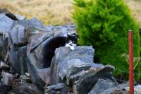 Isle of Seil - Ellenabeich - Cat
