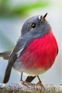 A Songbird's Classic Pose