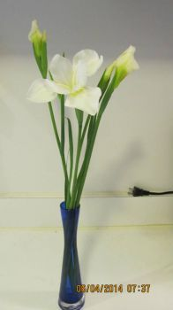 Japanese Iris 2