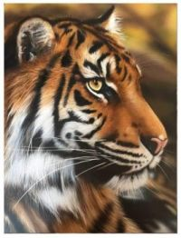Photo shopped Tiger Found on the internet
