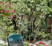 Blue Jay in my backyard