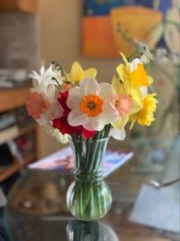 Narcissus in a vase