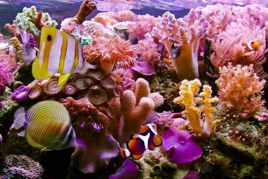 Endangered Hikkaduwa Coral Reef Sri Lanka