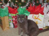 Smokey's 16th Christmas