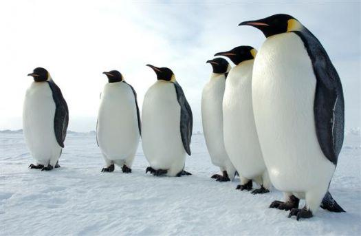 Penguin Meeting