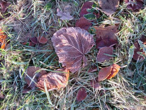 Frozen leaves...