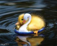 Duck On A Duck