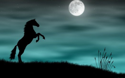 Horse at night