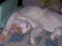 sleepy Twinkie