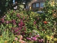 In my garden 29 May 2020