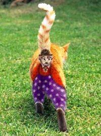 Chaplin Cat