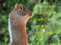 A Squirrel's Prayer