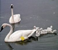 Mom & Dad with Seven Babies