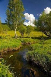 Obrázek přírody
