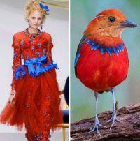 Fashion Follows Nature-