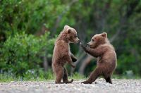You start off as a ninja, learning some moves. . .