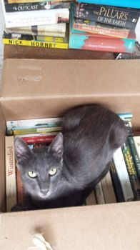 Book saver cat
